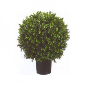 Product Highlight:  Potted Boxwood Ball Topiary