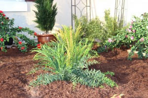 Creating a Drought-Proof Landscape Part 4: Incorporate Artificial Plants and Trees
