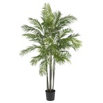 6 Foot Areca Palm
