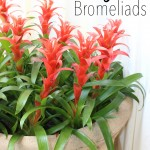 Artificial Bromeliads