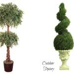 Indoor Vs. Outdoor Topiary