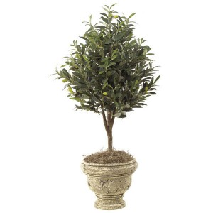 On Trend: Decorating with Olive Trees and Branches