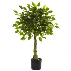 3 Foot Ficus
