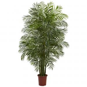 7.5 Foot Areca Palm