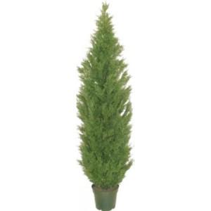 8 Foot Cedar