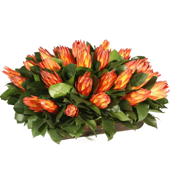 Preserved Protea Arrangement