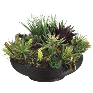 Crazy About Succulents