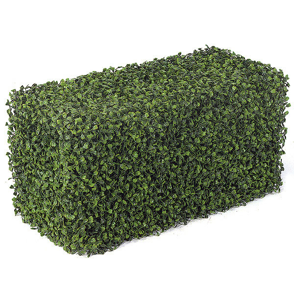 Boxwood Hedge 2