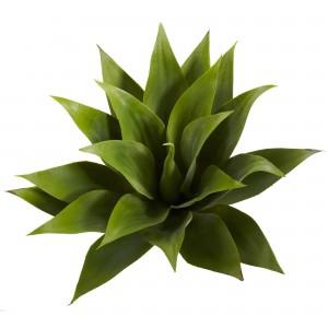 succulent 1 succulent 6