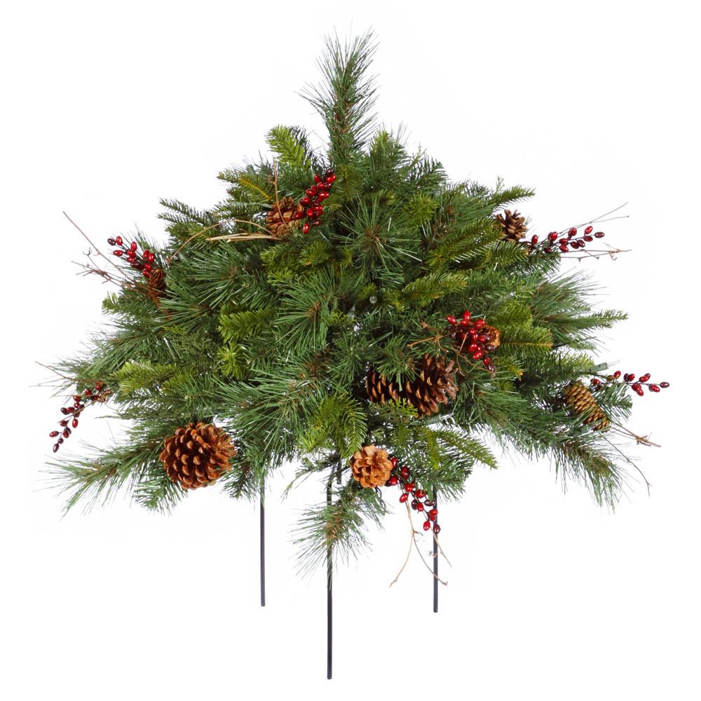 Cibola Mix Pine Bush