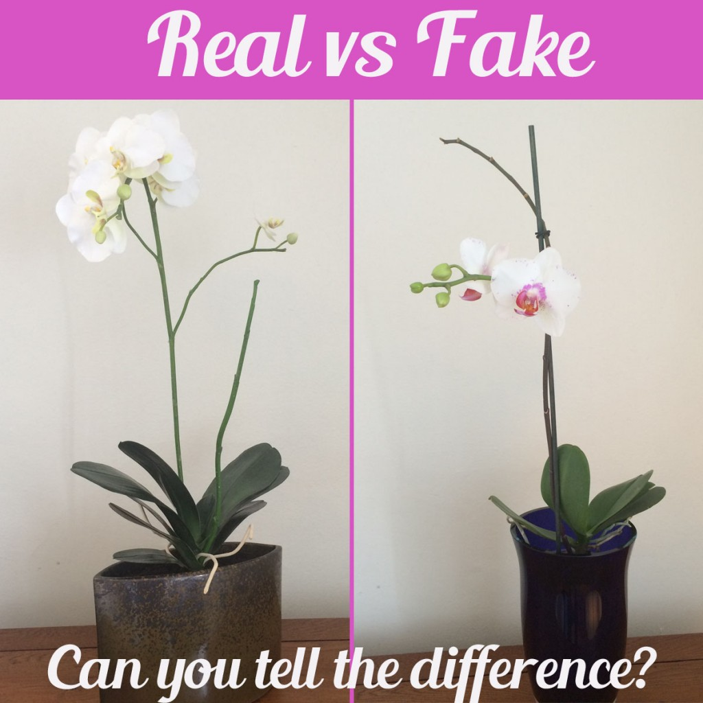 Orchids Real Vs Fake