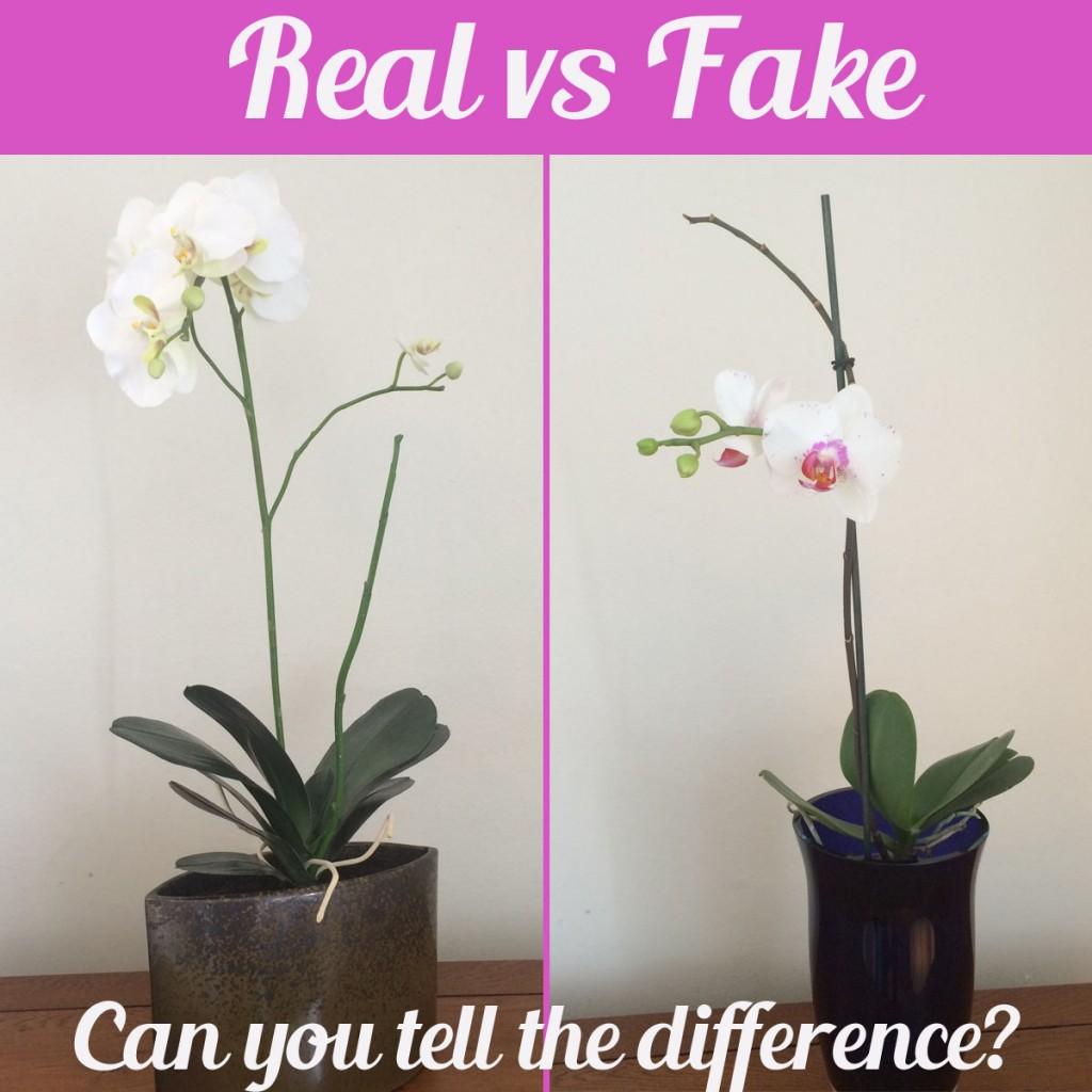 orchids real vs fake. Black Bedroom Furniture Sets. Home Design Ideas
