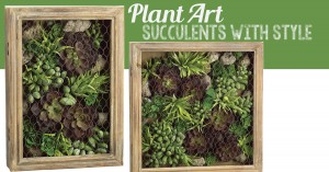 Plant Art: Succulents with Style