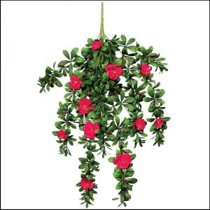 Azalea Hanging Bush