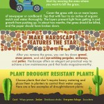 Tips to Make Your Yard Drought Resistant