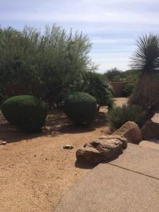 Creating A Drought-Proof Landscape Part 3: Choose Low-Water Plants