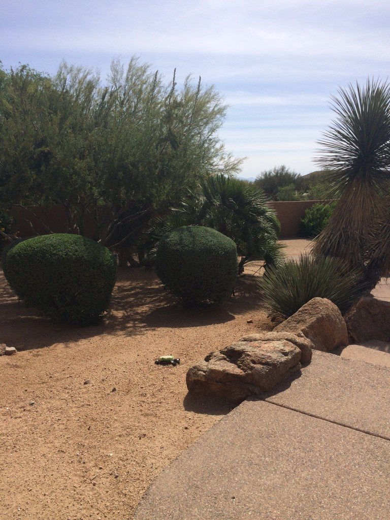 Creating a drought proof landscape part 3 choose low for Choosing plants for landscaping