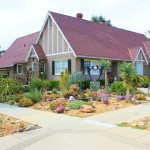Tips for Creating a Drought Tolerant Yard