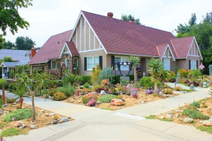 4 Tips for Creating a Drought Tolerant Yard