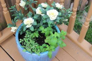 DIY Herb & Artificial Azalea Planter