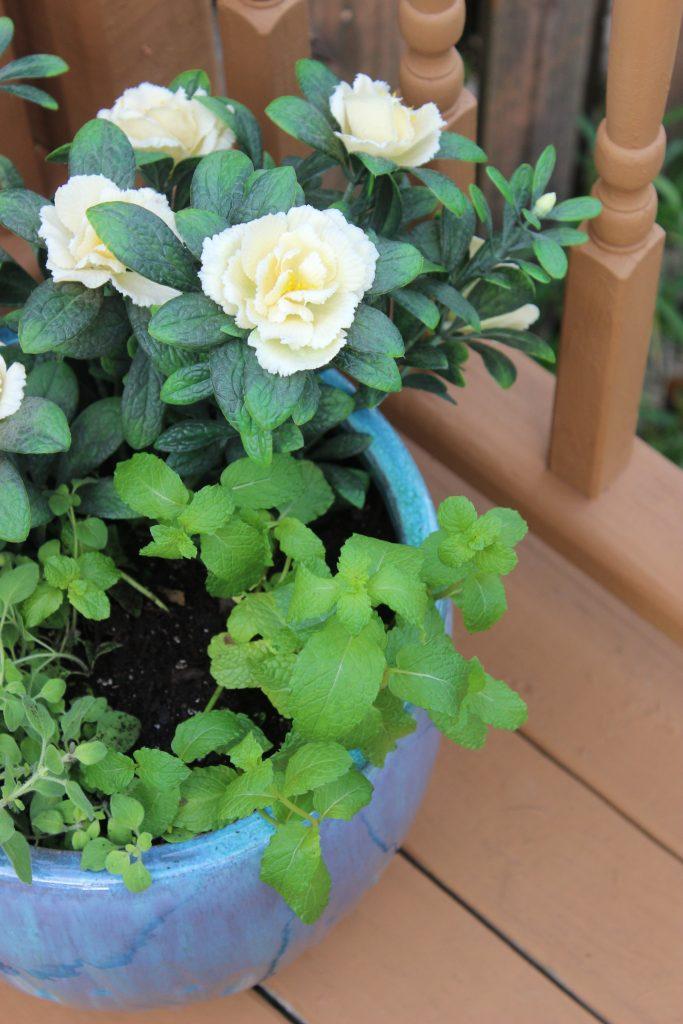 Herb & Artificial Azalea Planter