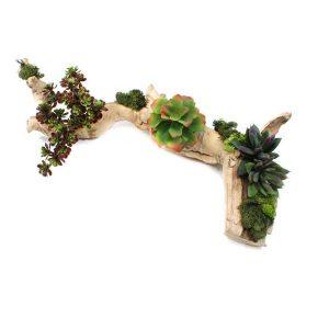 Succulents in Grapevine