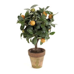Fruit topiary