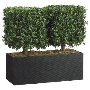 topiary hedges