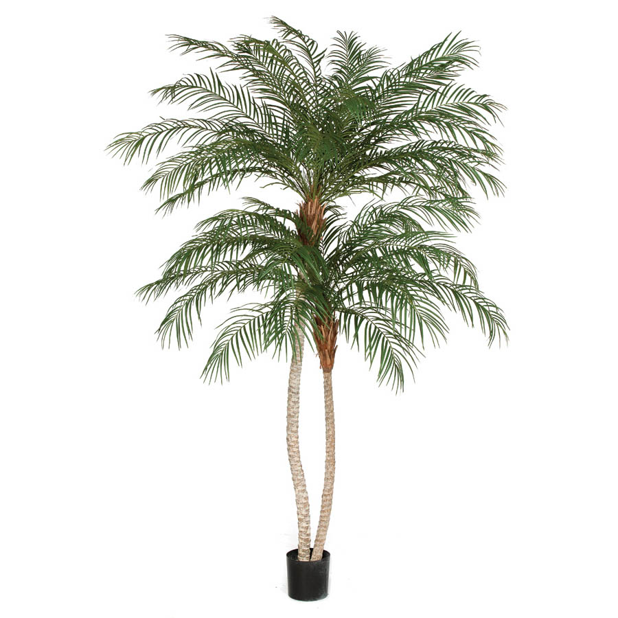 View Double Trunk Phoenix Palm Tree Potted 6 2476