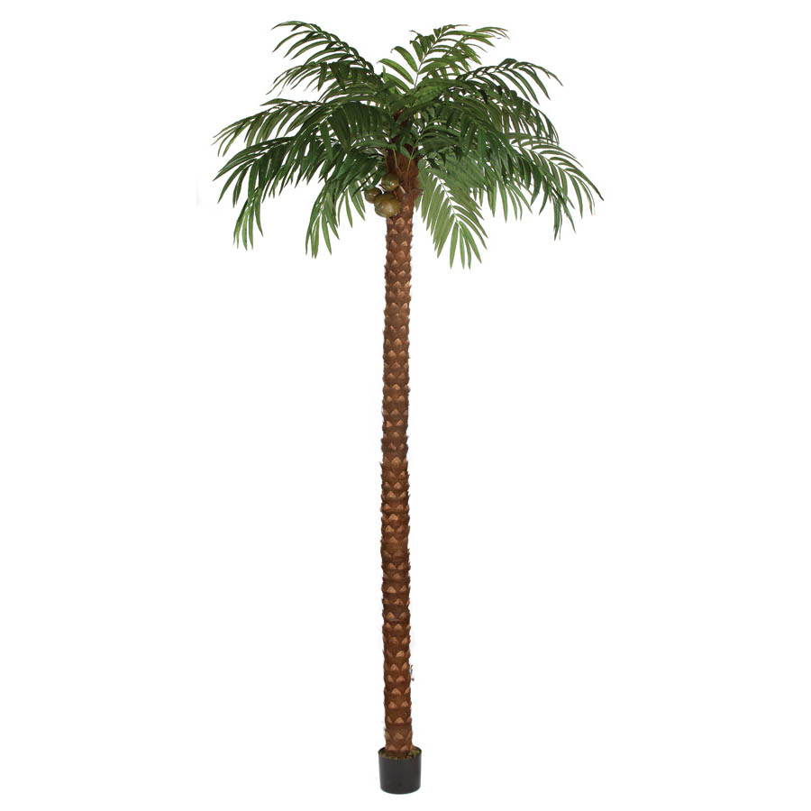 Serious Coconut-Palm-Tree-Potted Product Picture 634