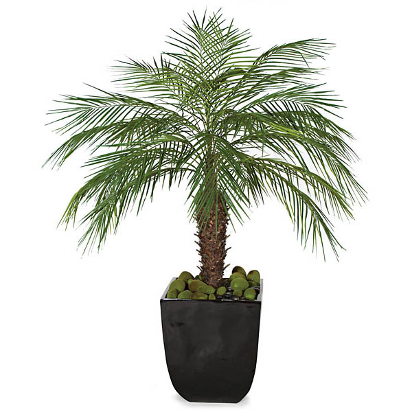 Magnificent Phoeni Palm Cluster Synthetic Trunk Potted Product Photo