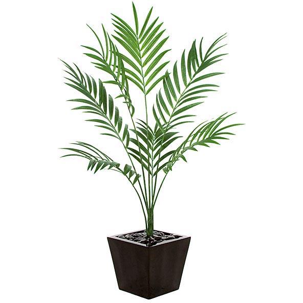 6.5 foot Fire Retardant Kentia Palm: Potted PR-86000