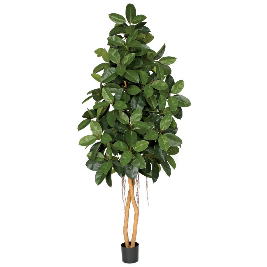 8 Foot Artificial Rubber Tree With Natural Trunks Potted