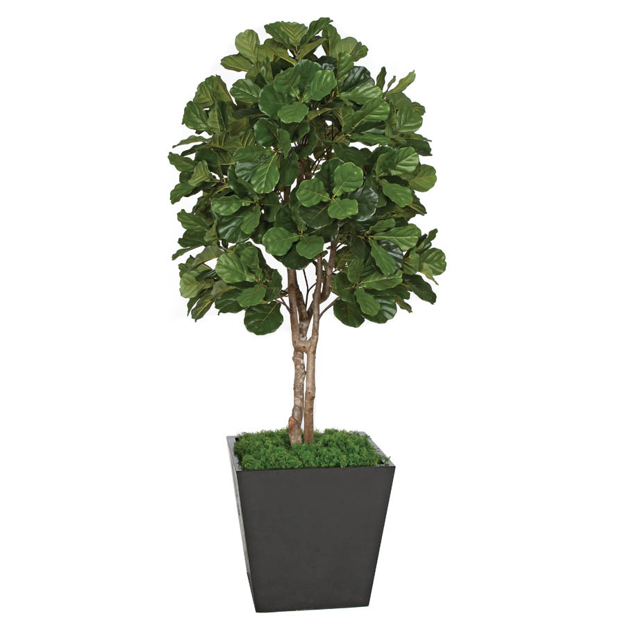 7 Foot Artificial Fiddle Leaf Fig Tree Potted W 150080