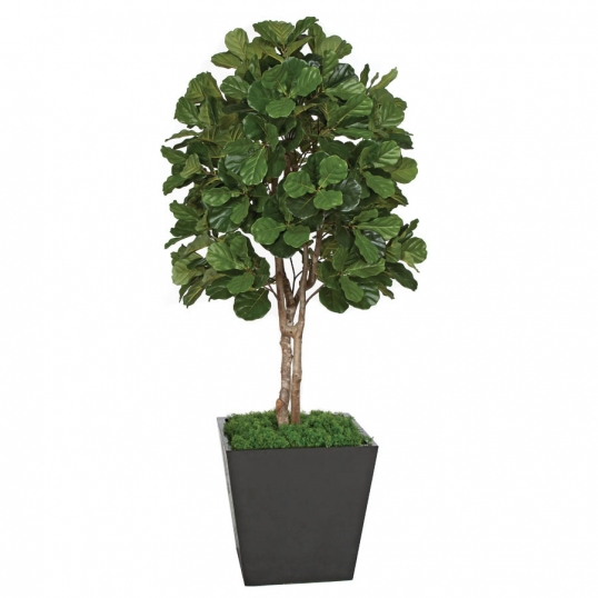 7 foot artificial fiddle leaf fig tree: potted | w-150080