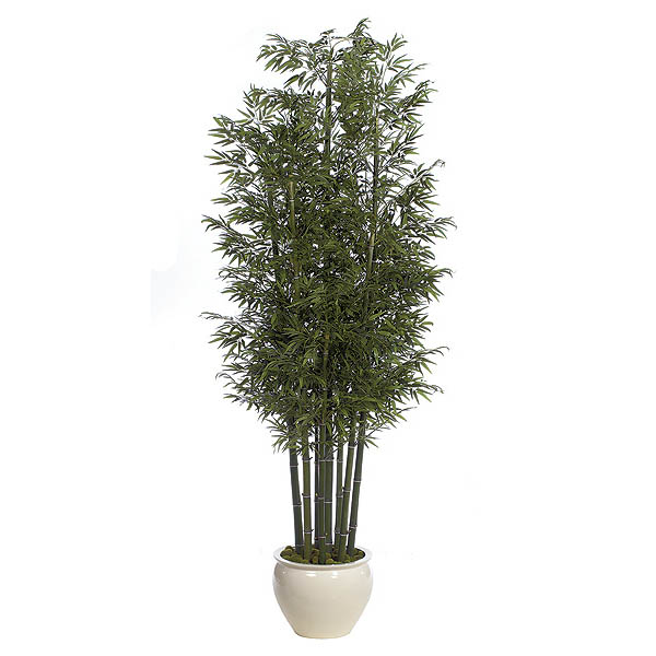 12 Foot Bamboo Tree With 7 Natural Trunks: Potted