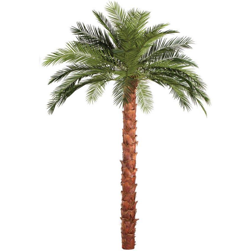 Order Fire Retardant Phoenix Palm Natural Trunk Product Photo