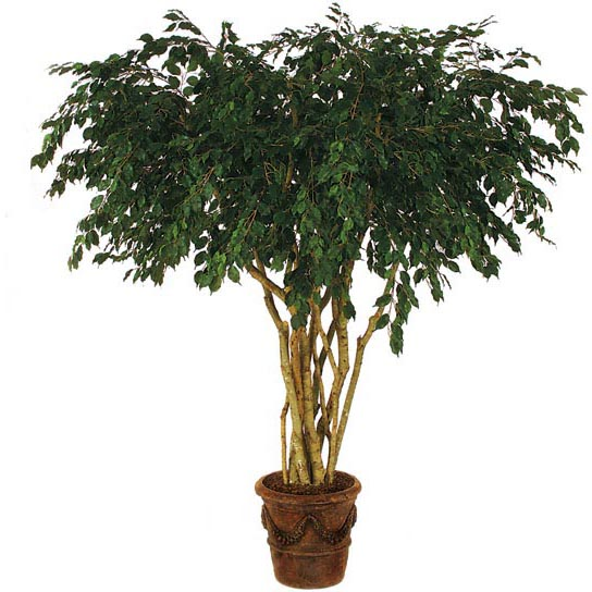 Splendid Fire-Retardant-Ficus-Tree-Natural-Trunks-Potted Product Picture 494