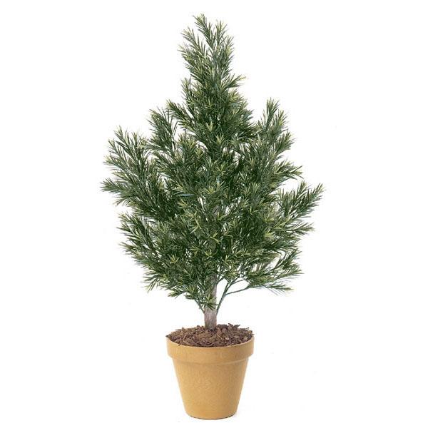 Valuable Artificial Outdoor Podocarpus Bush Natural Trunk 6 633