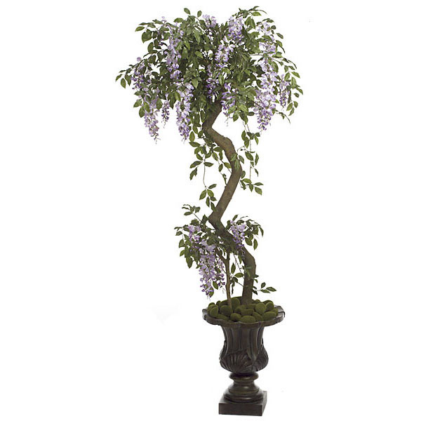 Order Wisteria Tree Potted Product Photo