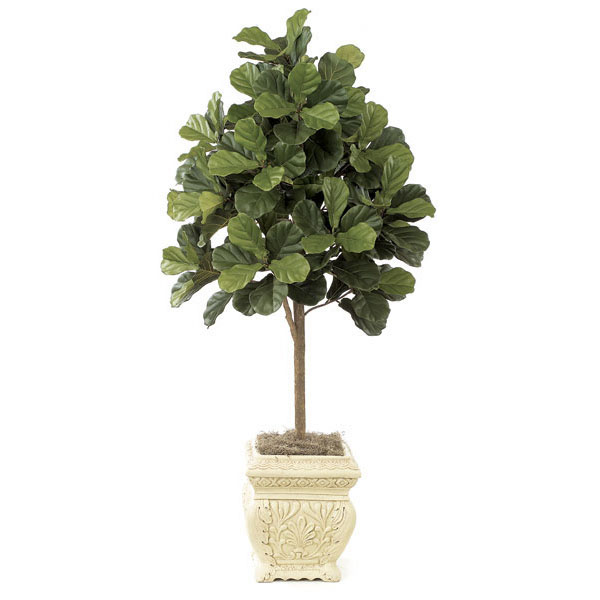 5 Foot Fiddle Leaf Fig Tree Potted W 2320