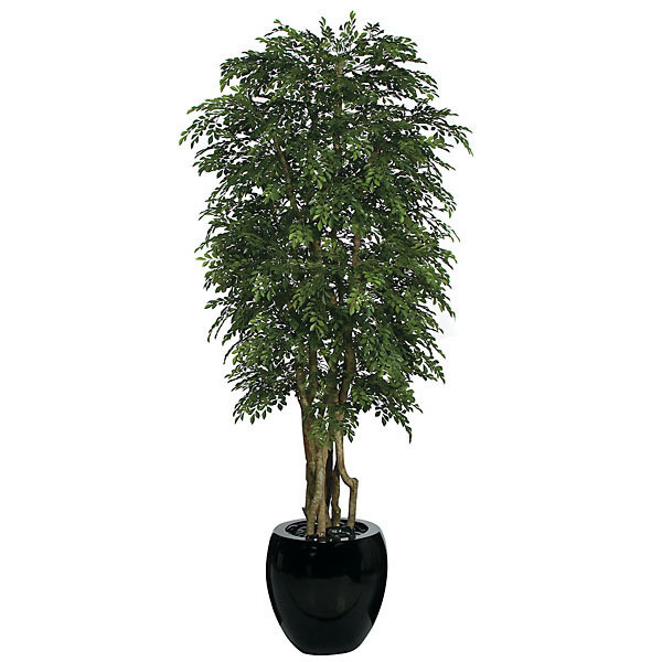 Outstanding Orange Jasmine Tree Potted 10 2331