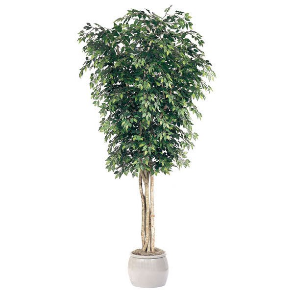 10 Foot Artificial Ficus Tree: Potted