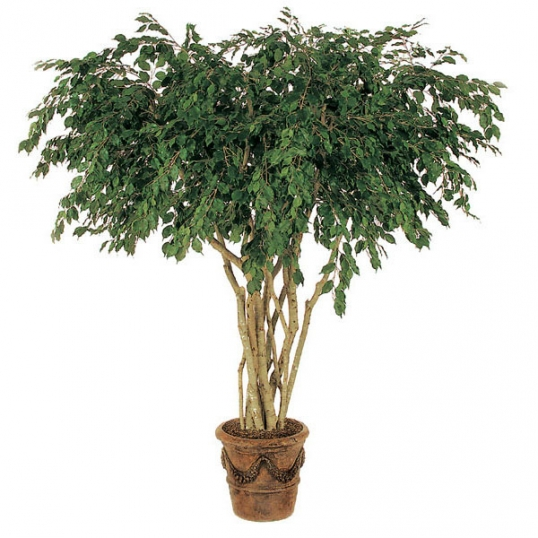 8 foot artificial ficus tree | w-2222
