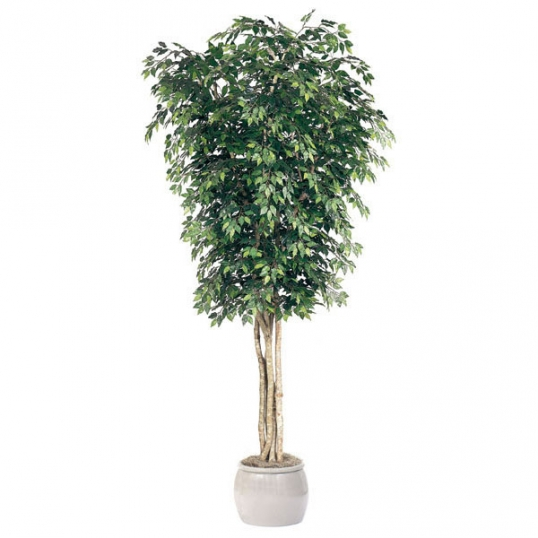 12 foot artificial ficus tree: potted | gp-12