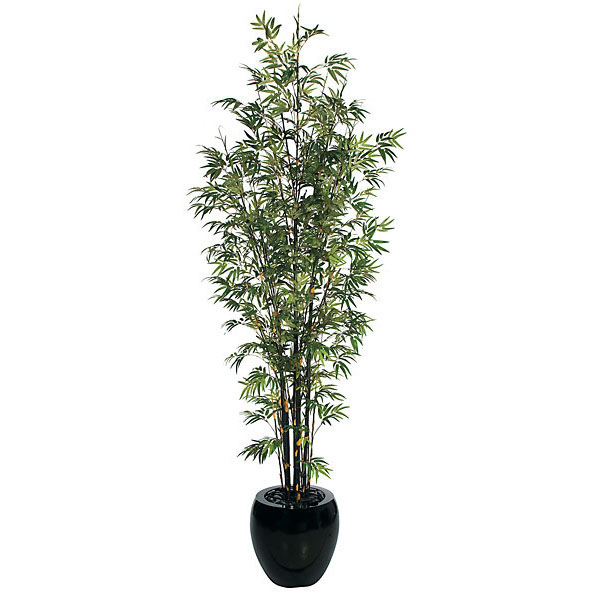 10 Foot Bamboo Tree: Potted