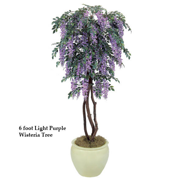Select Wisteria-Tree-Multiple-Colors Product Picture 339