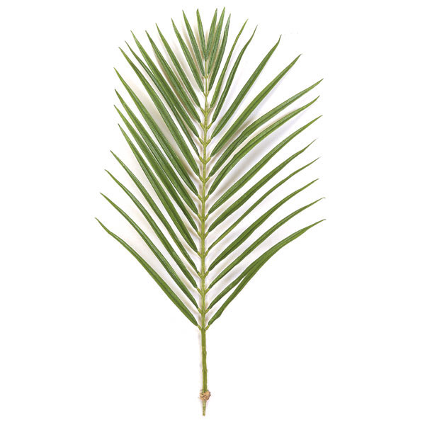 36 Inch Areca Palm Branch With 32 Leaves Set Of 12 P 2680