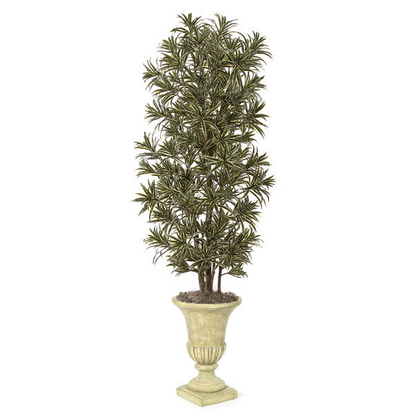 One of a kind Silk Dracaena Reflexa Tree Natural Trunks Potted Product Photo