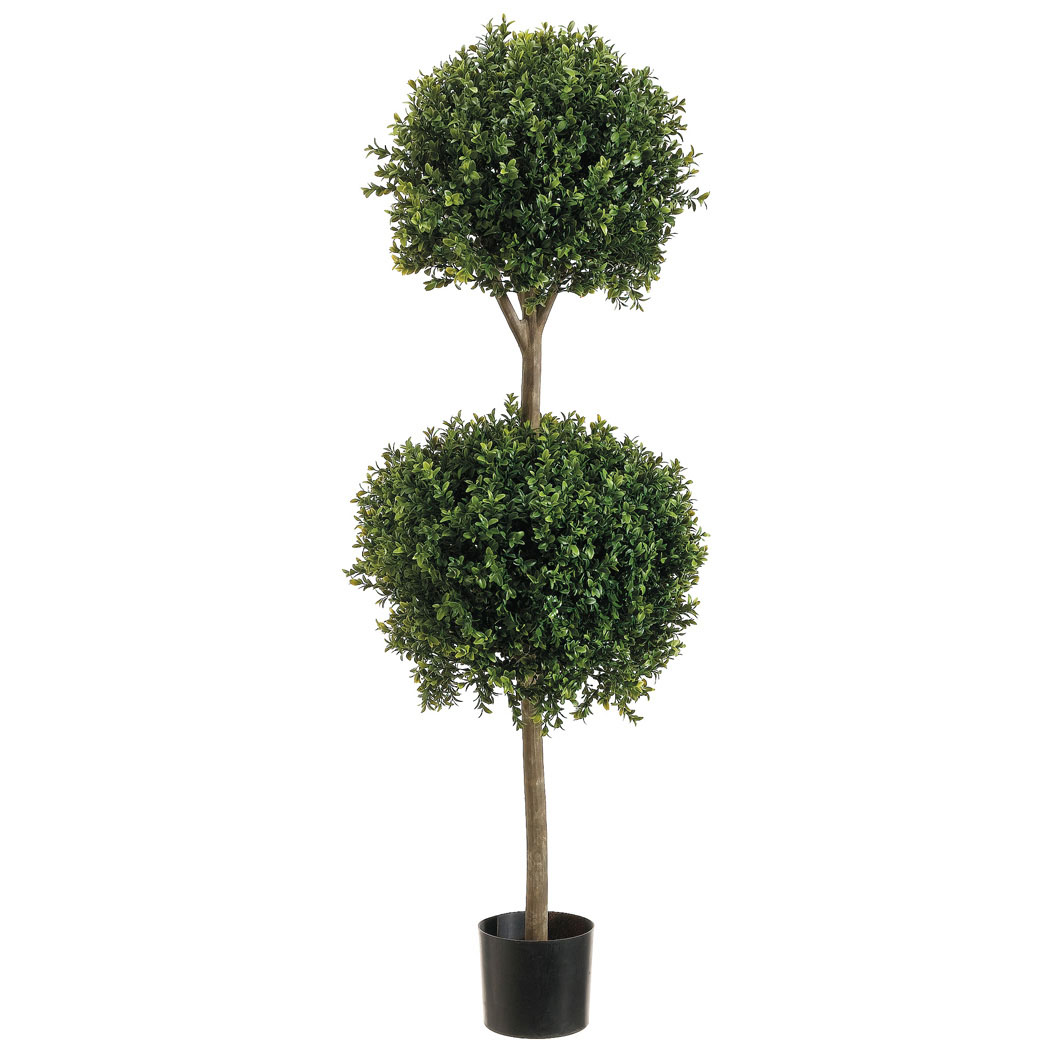 4 Foot Outdoor Double Ball Boxwood Topiary: Potted